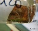 Echantillon métallique après essai en eau de mer naturelle