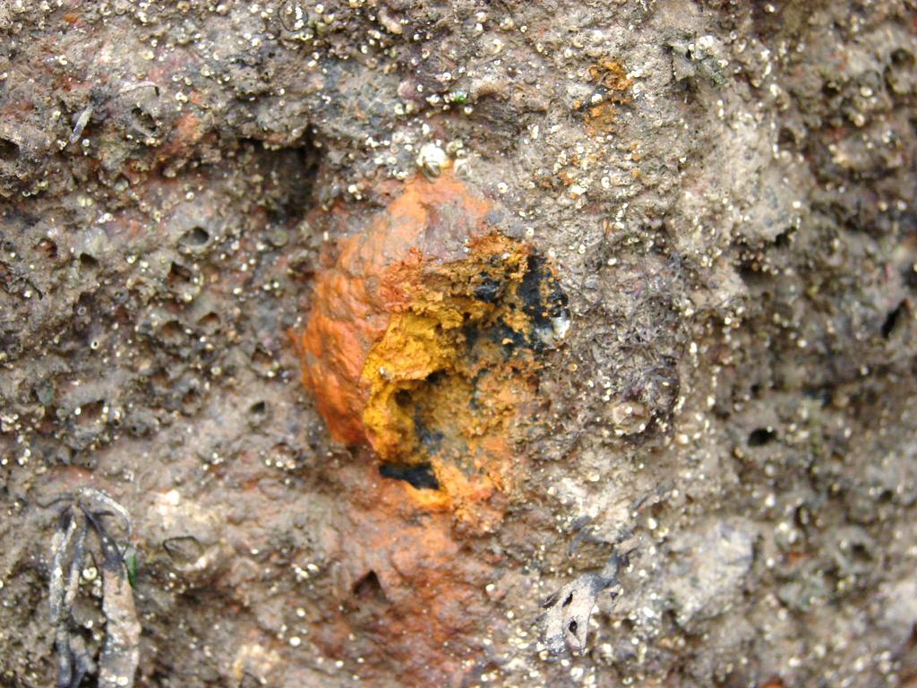 Tubercule de corrosion en milieu portuaire