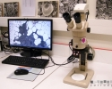 Loupe binoculaire du laboratoire corrosion